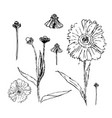 set of drawn with ink daisies flowers vector image