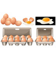 raw eggs in different packages vector image