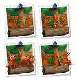 Four picture frames of animals with brown fur vector image vector image