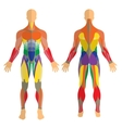 Detailed of human muscles Exercise vector image