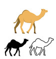 set of flat camel icon vector image
