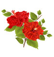two red hibiscus hibiscus stem tropical flower vector image
