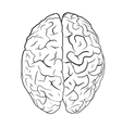 Brain on white background vector image