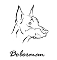 doberman 1 vector image