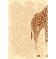 Backside of giraffe vector image vector image
