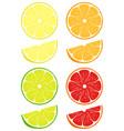 citrus slices set vector image