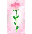 Beautiful pink rose on a pink background vector image