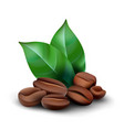 coffee beans with leafs vector image