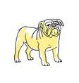 english bulldog hand drawn isolated icon vector image
