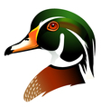 wood duck vector image