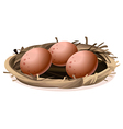 A nest with three eggs vector image