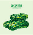 digital detailed line art color cucumber vector image