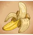 engraving banana retro vector image