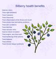 bilberry ripe vector image