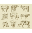 cows hand draw vector image