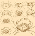 Set of 9 vintage engraved crabs vector image