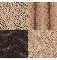 pattern set animal vector image