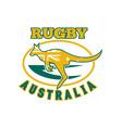 Rugby Australia kangaroo wallaby vector image