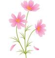 kosmeya flowers vector image
