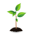 New green sprout and soil vector image
