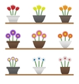 Colorful flowers in pots vector image