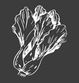 leafy chinese cabbage head isolated white outline vector image