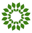 circular frame of green leaves vector image
