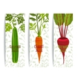 Healthy Juices Design Collection on White with vector image