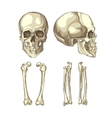 Medical of the human skull and bones vector image