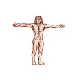 Vitruvian Man Arms Spread Front Etching vector image