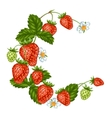 Decorative element with red strawberries vector image