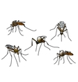 biting mosquitoes vector image vector image