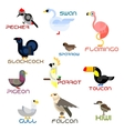 Cartoon colorful flat birds set vector image