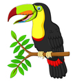toucan cartoon sitting on the branch vector image