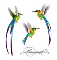 hummingbirds set tropical seamless pattern with vector image