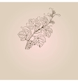 Vintage with grape branch vector image