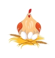 Hen in Nest Sitting on Eggs vector image