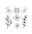 herbal floral drawing isolated liner vector image