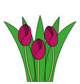 beautiful roses cultivated icon vector image