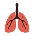 lung organ human vector image