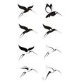Birds of paradise decor set vector image