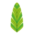 leafs natural palm tropical icon vector image