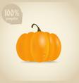 Cute orange pumpkin vector image vector image