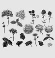 vintage monochrome floral set of natural elements vector image