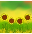 watercolor sunflower vector image