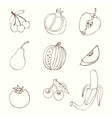 Sketches of fruit vector image