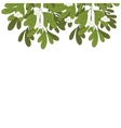 Christmas upper edge mistletoe with white flowers vector image