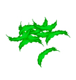 A Stack of Fresh Green Winged Beans vector image