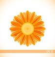 orange gerbera flower vector image