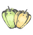 green and orange sweet peppers isolated sketch vector image